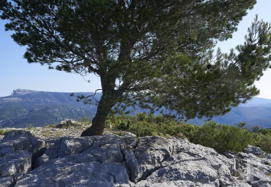 A vast estate with three gites in a nature reserve in the the Var - photo  n°6